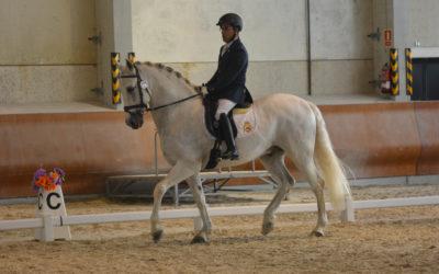 Medalla de ORO para David de  la lglesia en equitación adaptada Cto. de España